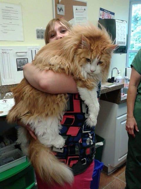 gatos masivos 16