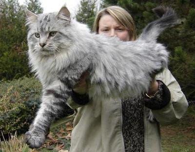 gatos masivos 3
