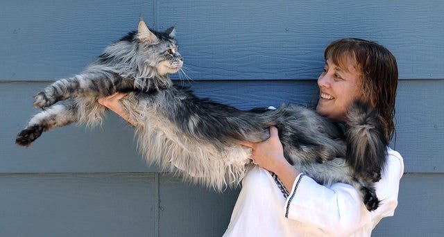 gatos masivos 4