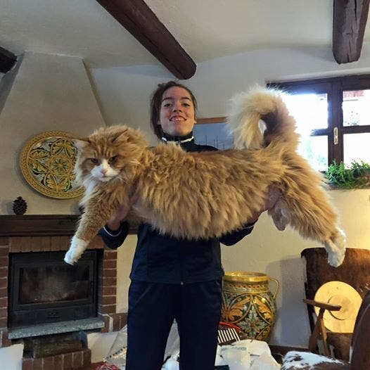 gatos masivos 5