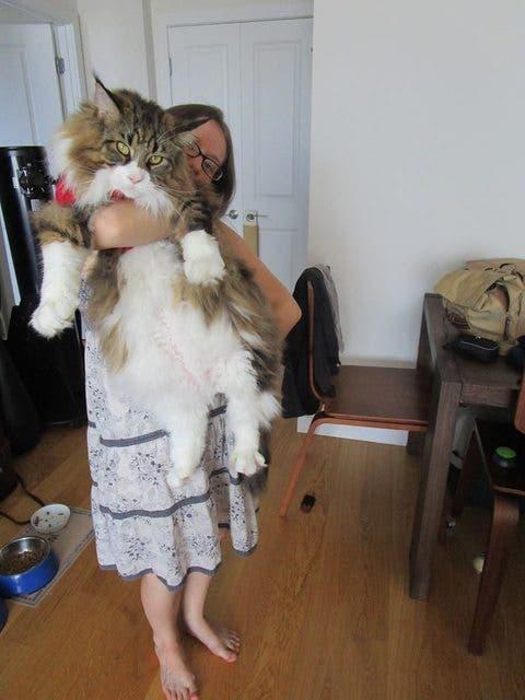 gatos masivos 6