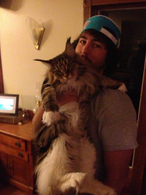 gatos masivos 7