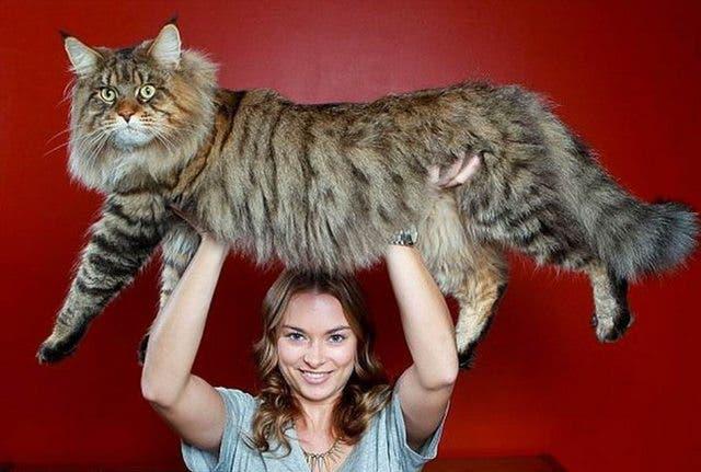 gatos masivos 8