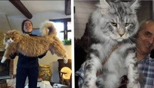 gatos masivos id