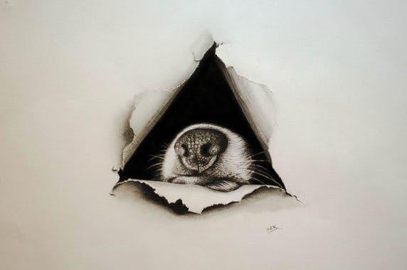 ilustraciones-ilusiones-opticas13