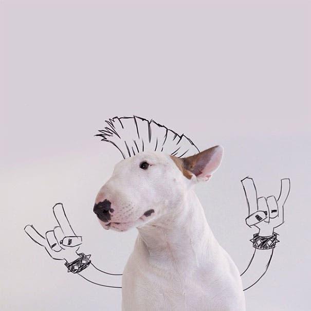 jimmy-perrito-divertido-1