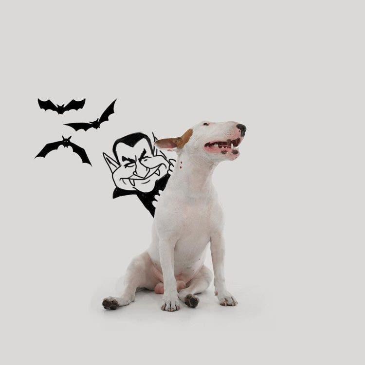 jimmy-perrito-divertido-10