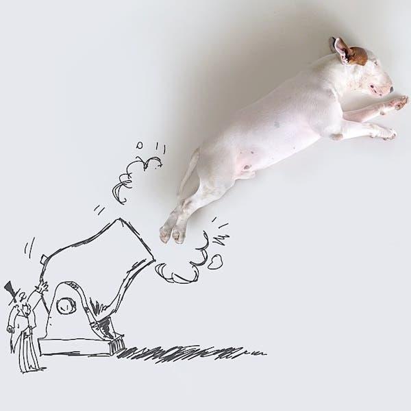 jimmy-perrito-divertido-11