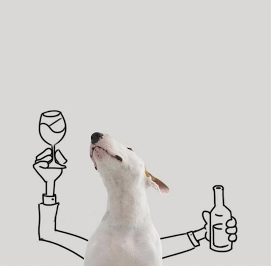 jimmy-perrito-divertido-2