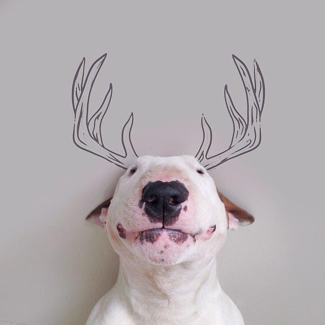 jimmy-perrito-divertido-4