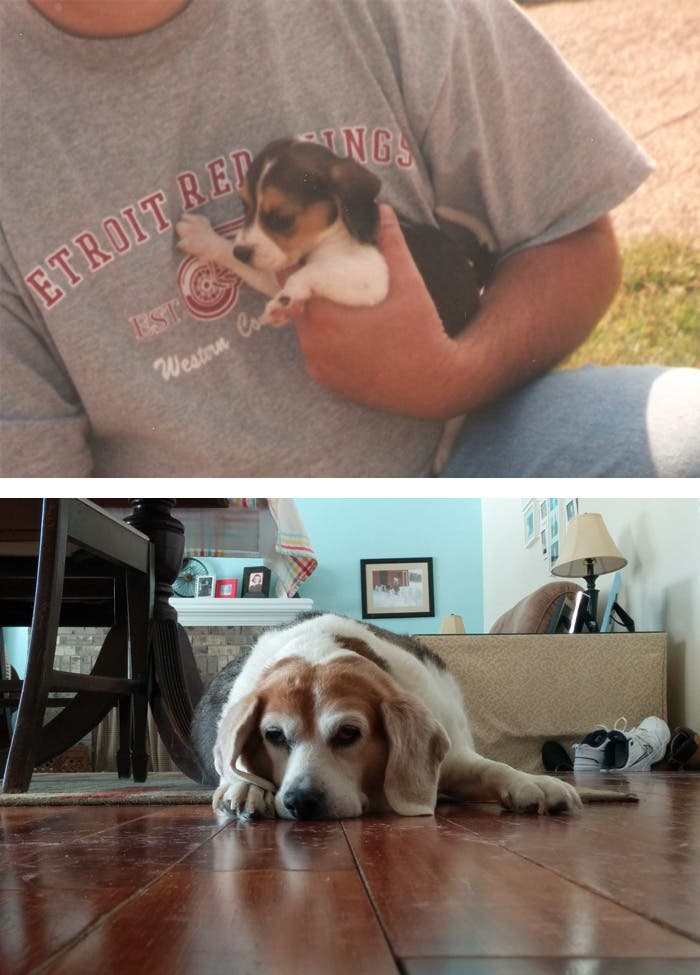 mascotas antes y despues 10