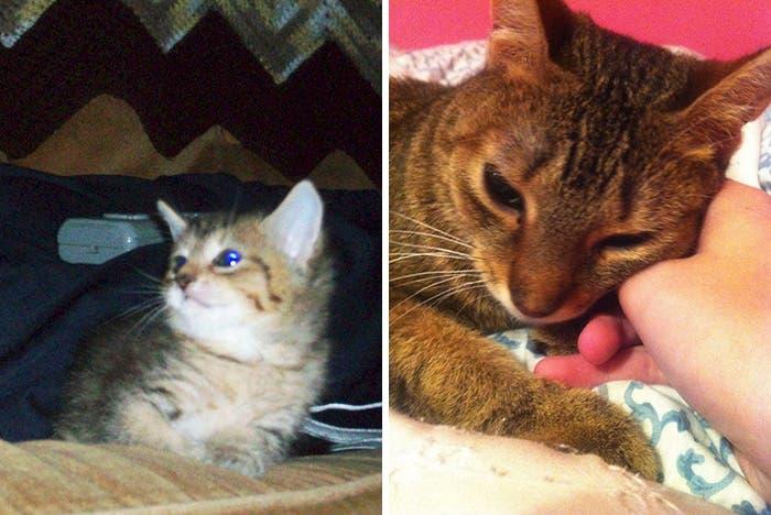 mascotas antes y despues 11