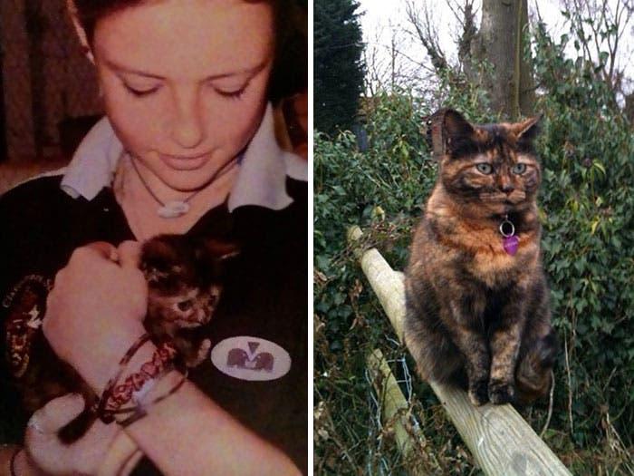 mascotas antes y despues 12