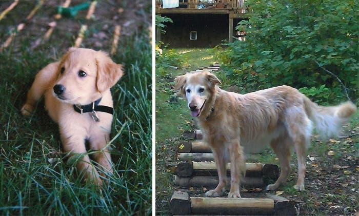 mascotas antes y despues 7
