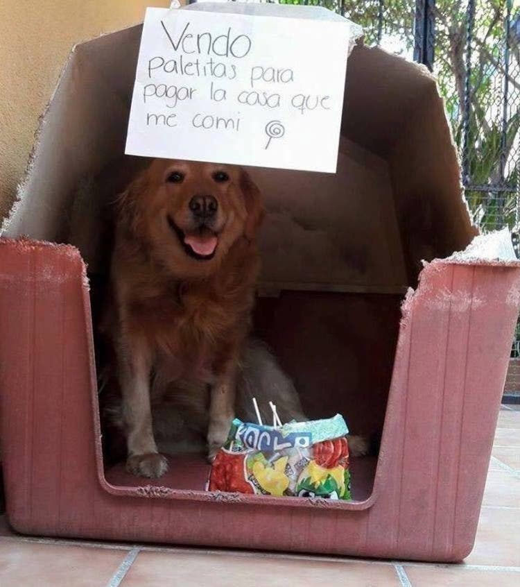 mascotas-traviesas-venden-4