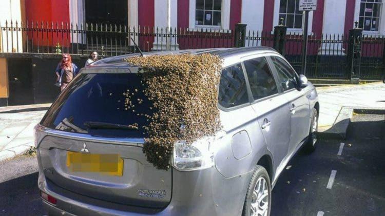 mil-abejas-persiguen-su-auto1
