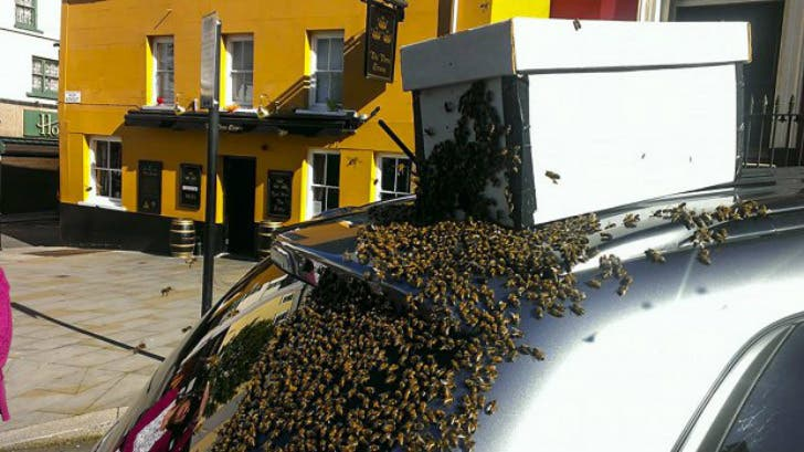 mil-abejas-persiguen-su-auto2