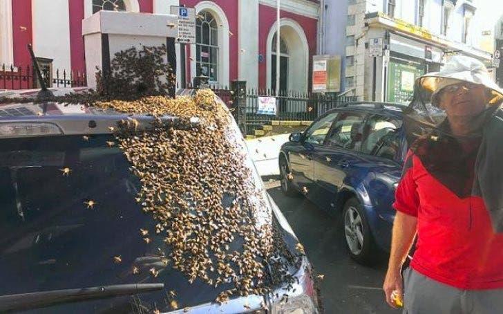 mil-abejas-persiguen-su-auto3