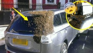 mil-abejas-persiguen-su-auto6