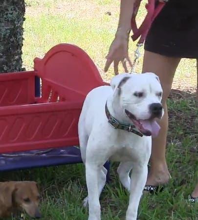 nueva-vida-para-perrito-rescatado3