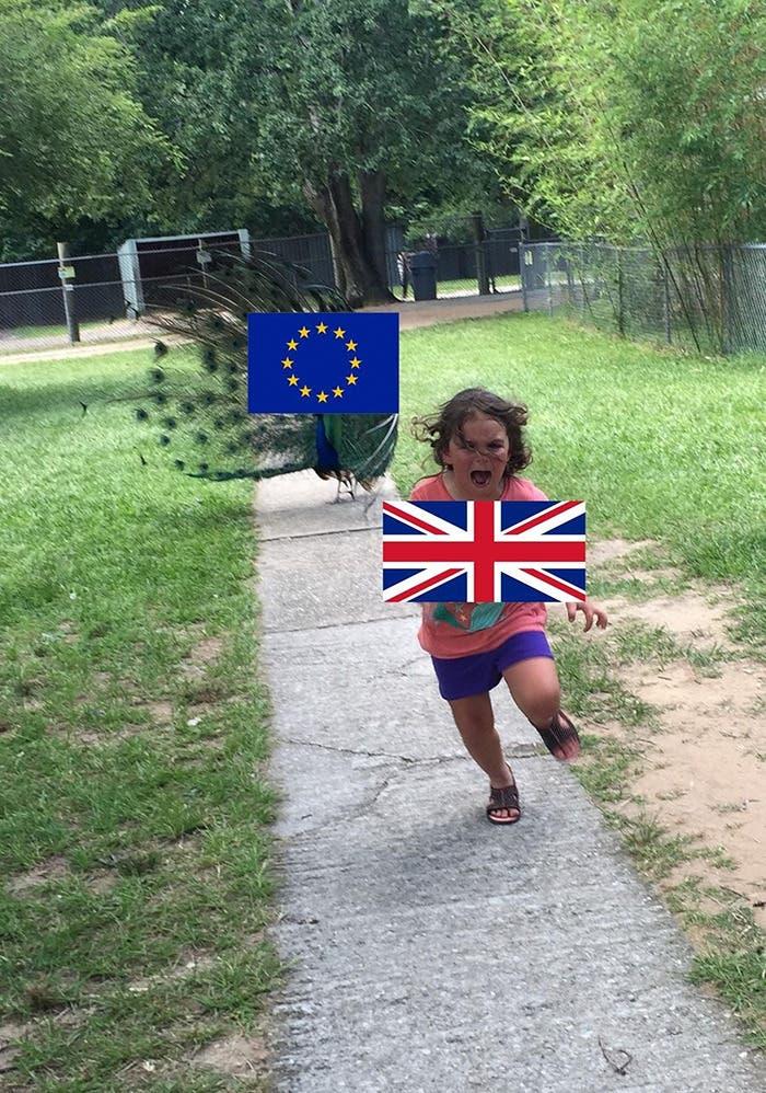 pavoreal memes 5