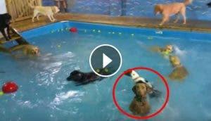 perrito-inmovil-en-piscina1 - Copy