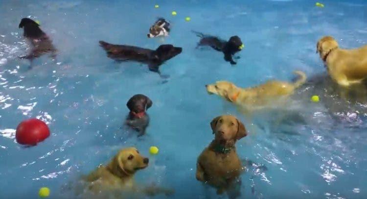 perrito-inmovil-en-piscina2