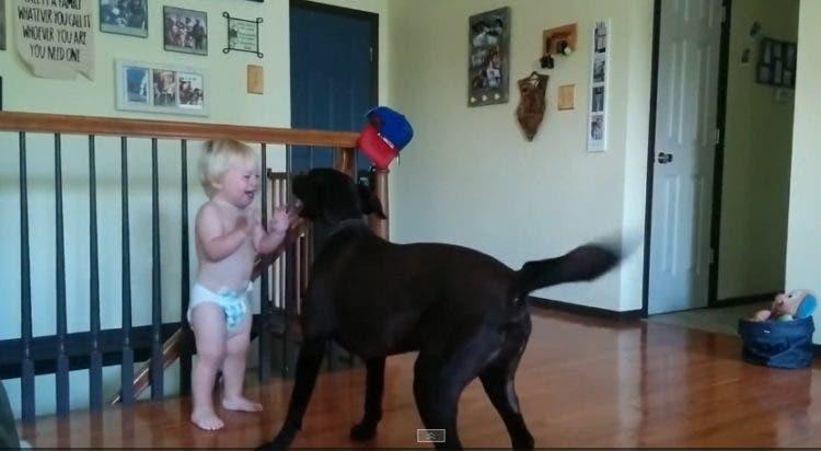 perro-nino-amigos-creciendo1