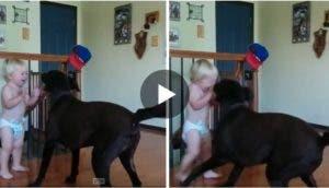 perro-nino-amigos-creciendo2