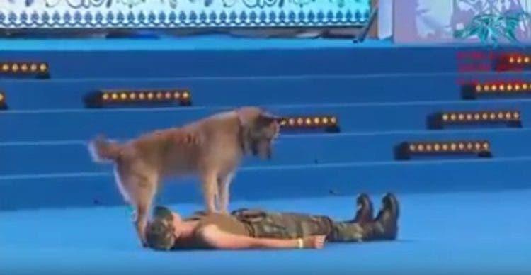 perro-rescatista-aprende-a-hacer-reanimacion