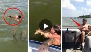 rescate-de-ciervos-lago4