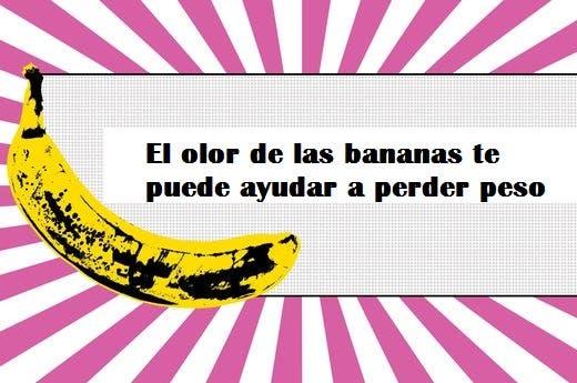 todo sobre bananas 14