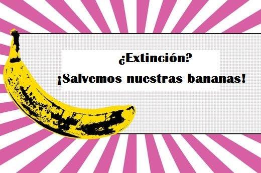 todo sobre bananas 4