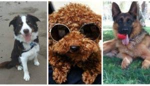 Perros-inteligentes-portada