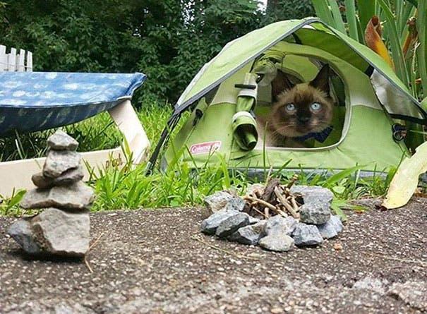 acampando con gatos 1