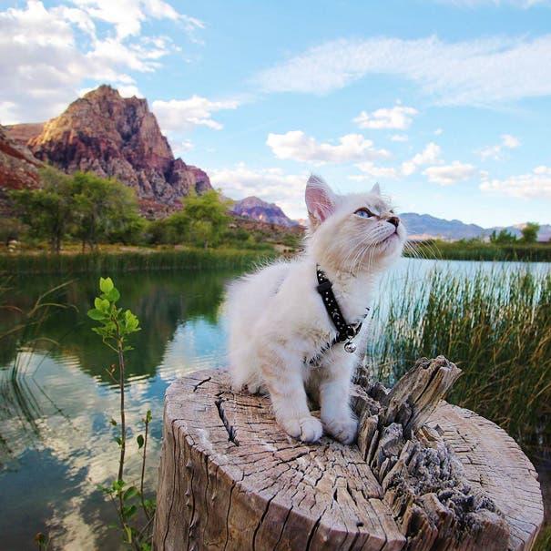 acampando con gatos 12