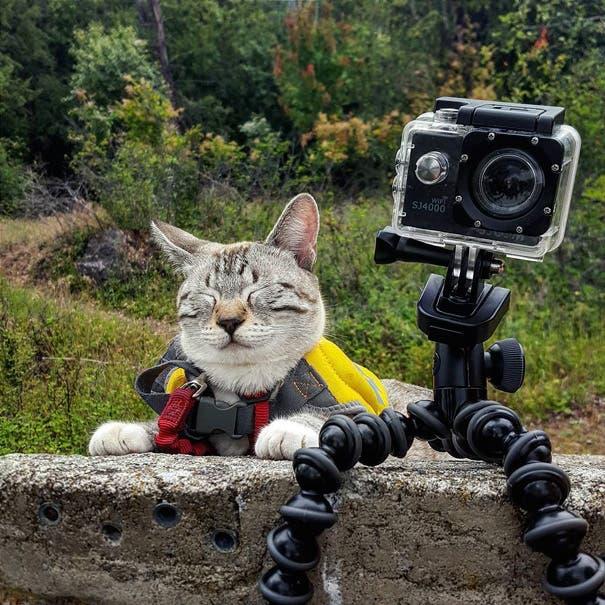 acampando con gatos 14