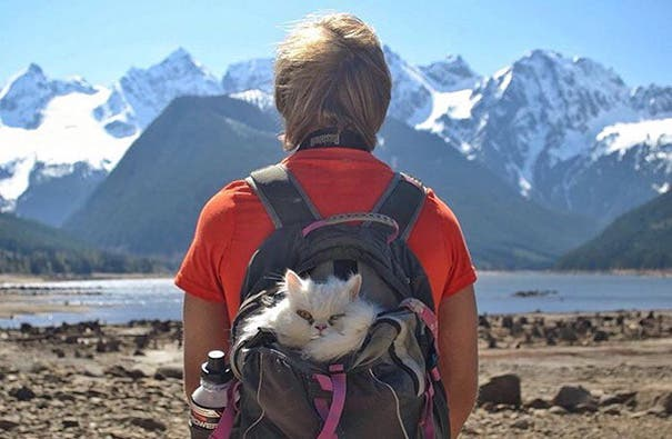 acampando con gatos 15