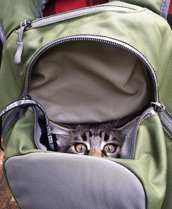 acampando con gatos 6