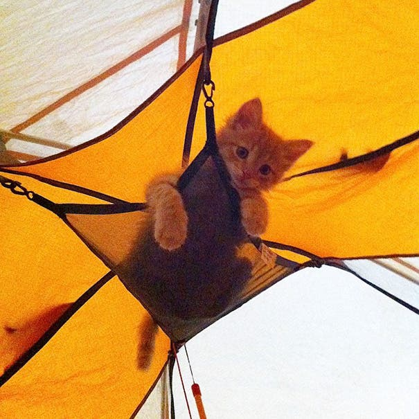 acampando con gatos 7