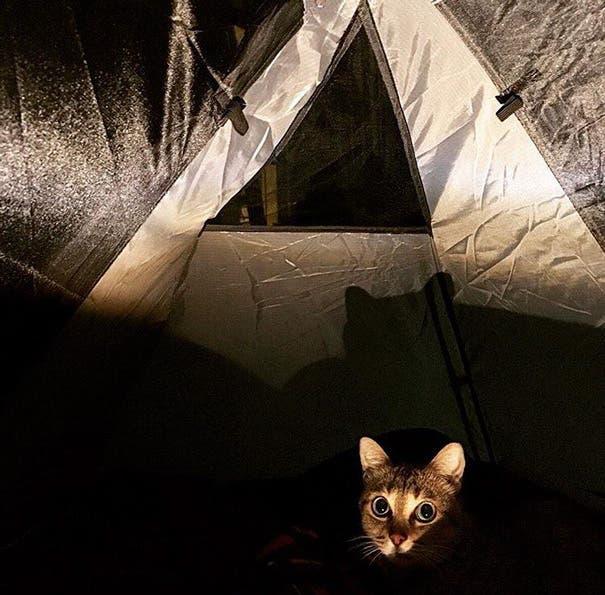acampando con gatos 8