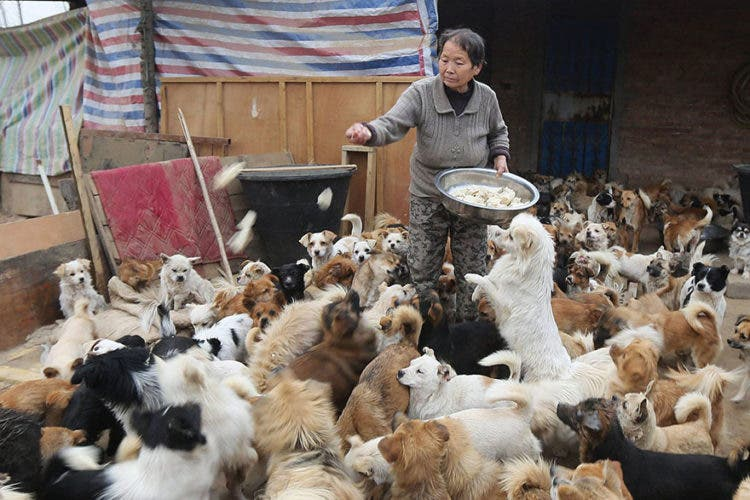 anciana-china-cuida-1300-perros-1