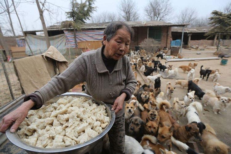 anciana-china-cuida-1300-perros-2