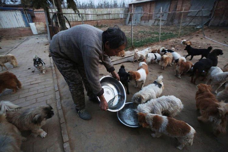 anciana-china-cuida-1300-perros-3
