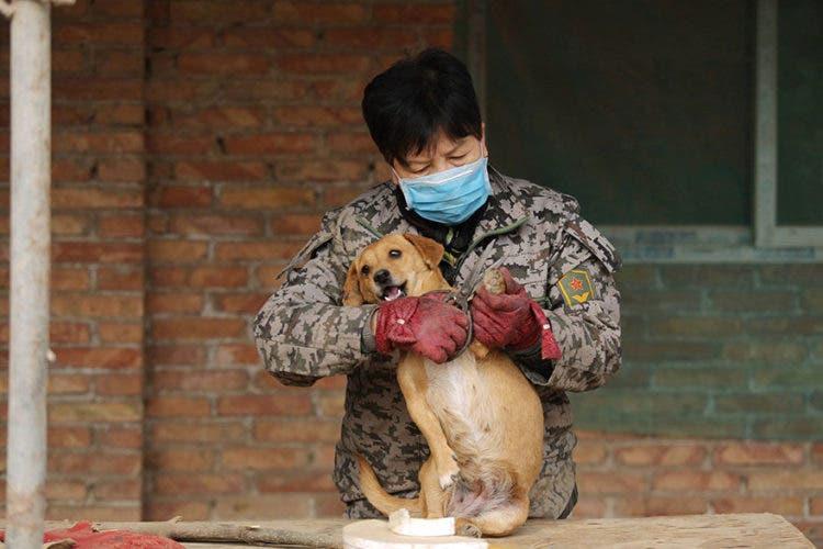 anciana-china-cuida-1300-perros-4