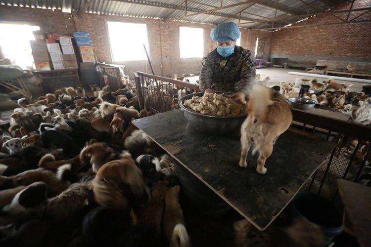 anciana-china-cuida-1300-perros-5