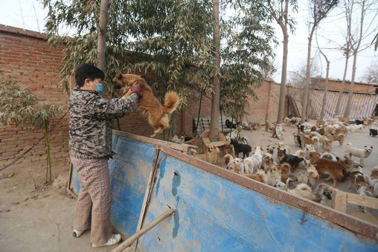 anciana-china-cuida-1300-perros-6