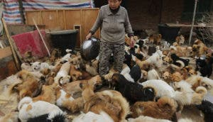 anciana-china-cuida-1300-perros-7