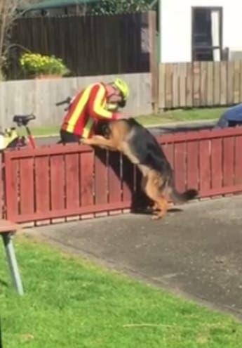 cartero-perro-saludo1