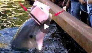 delfin-roba-tablet-a-mujer3